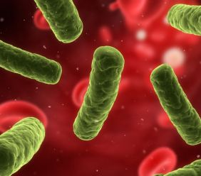 Bakterie v našich střevech
